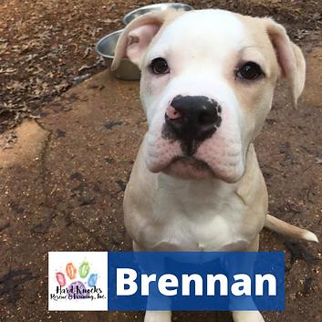 Brennan1.png