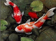 Fish Art - Feng Shui.png