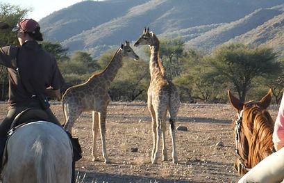 Okapuka Horse Safaris