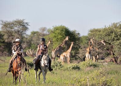 Close to giraffe