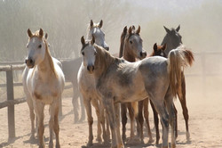 Some of our greys