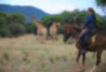Giraffe & rider 05.jpg