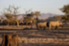 Okapuka horse riding safaris and endurance namibia
