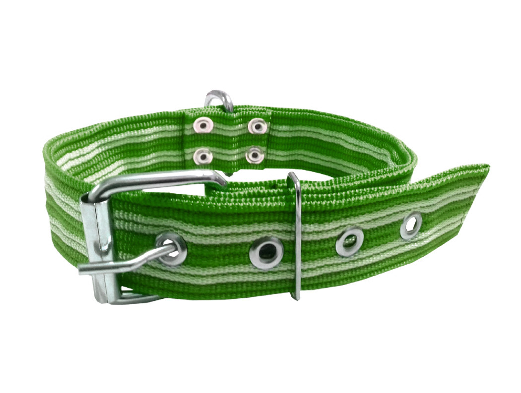 Collar pitbull nylon verde