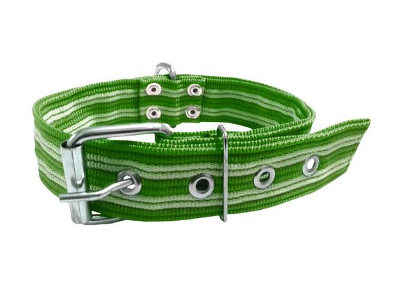Collar pitbull nylon verde