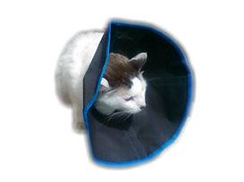 isabelino gato2.jpg