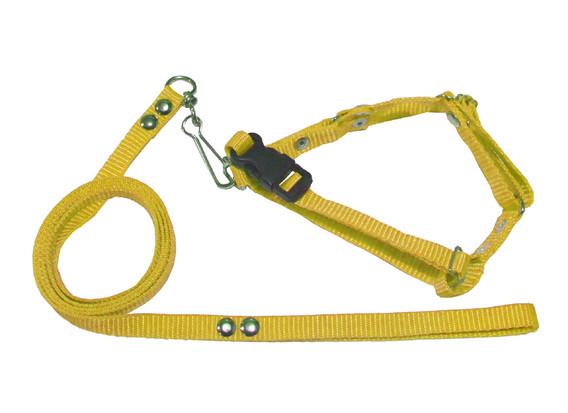 Correa con pechera de iguana amarilla