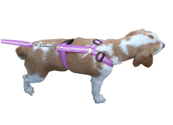 Correa con pechera rayada mediana lila