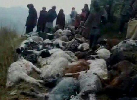 Удар молнии убил более ста овец в индийском штате Джамму