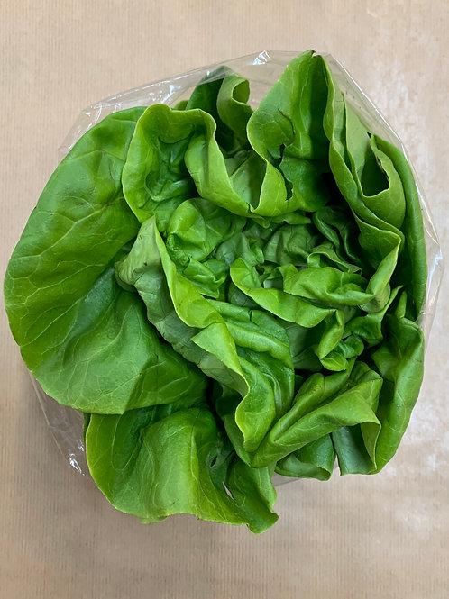 Plain Lettuce