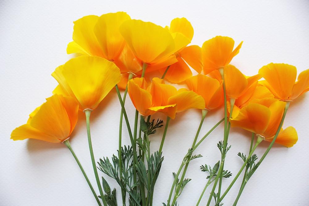 wedding flower san diego