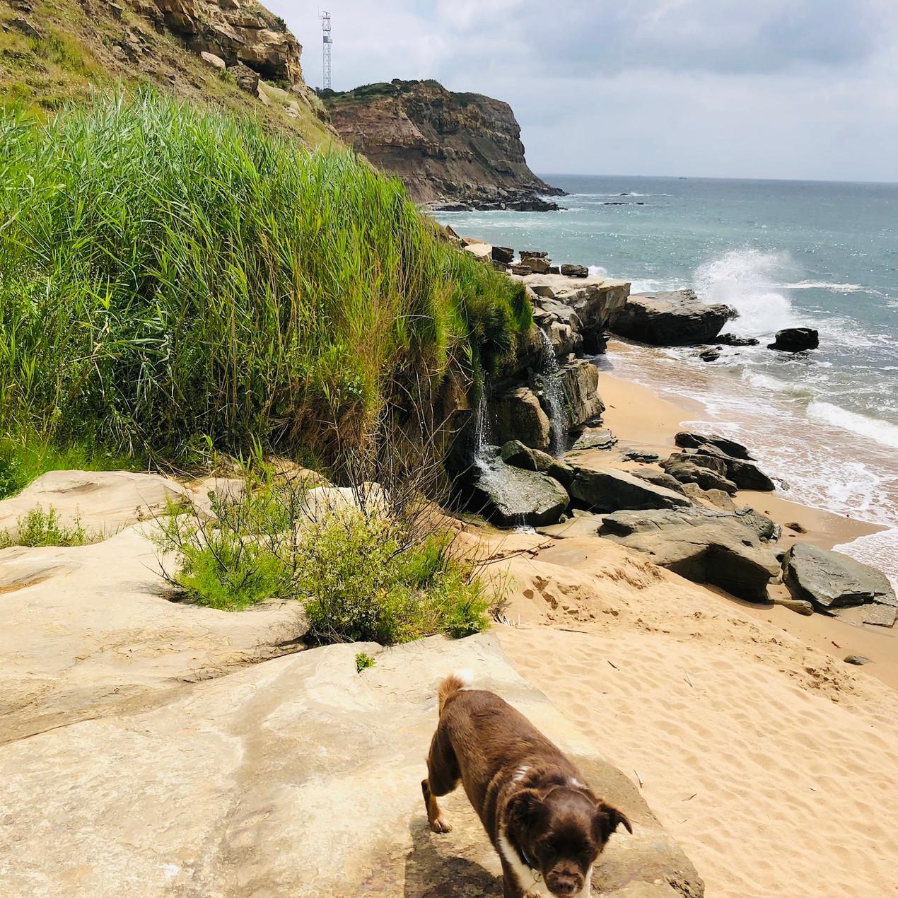 Strand Portugal, Reisen mit Hund
