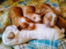 Rose's pups 3