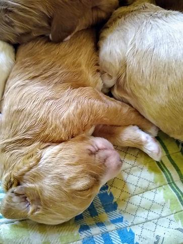 Rose's pups 2