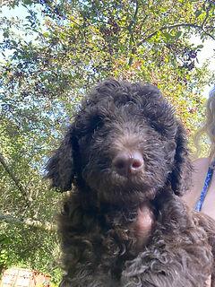 5 Week old pup