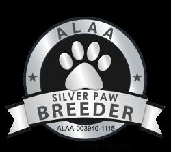Autumn Haze Labradoodles ALAA Silver Paw