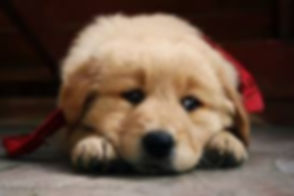 SadPuppyImage.jpeg