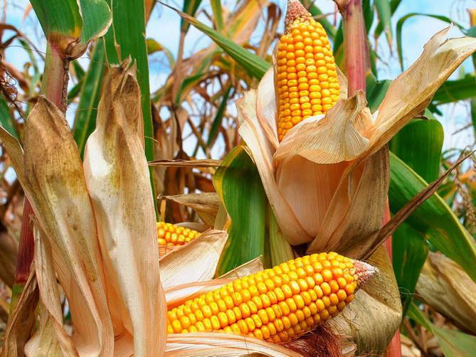 ¿Se están etiquetando los OMG?