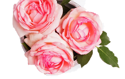 flowers - image.png