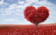 Heart-Tree-blossom.jpg