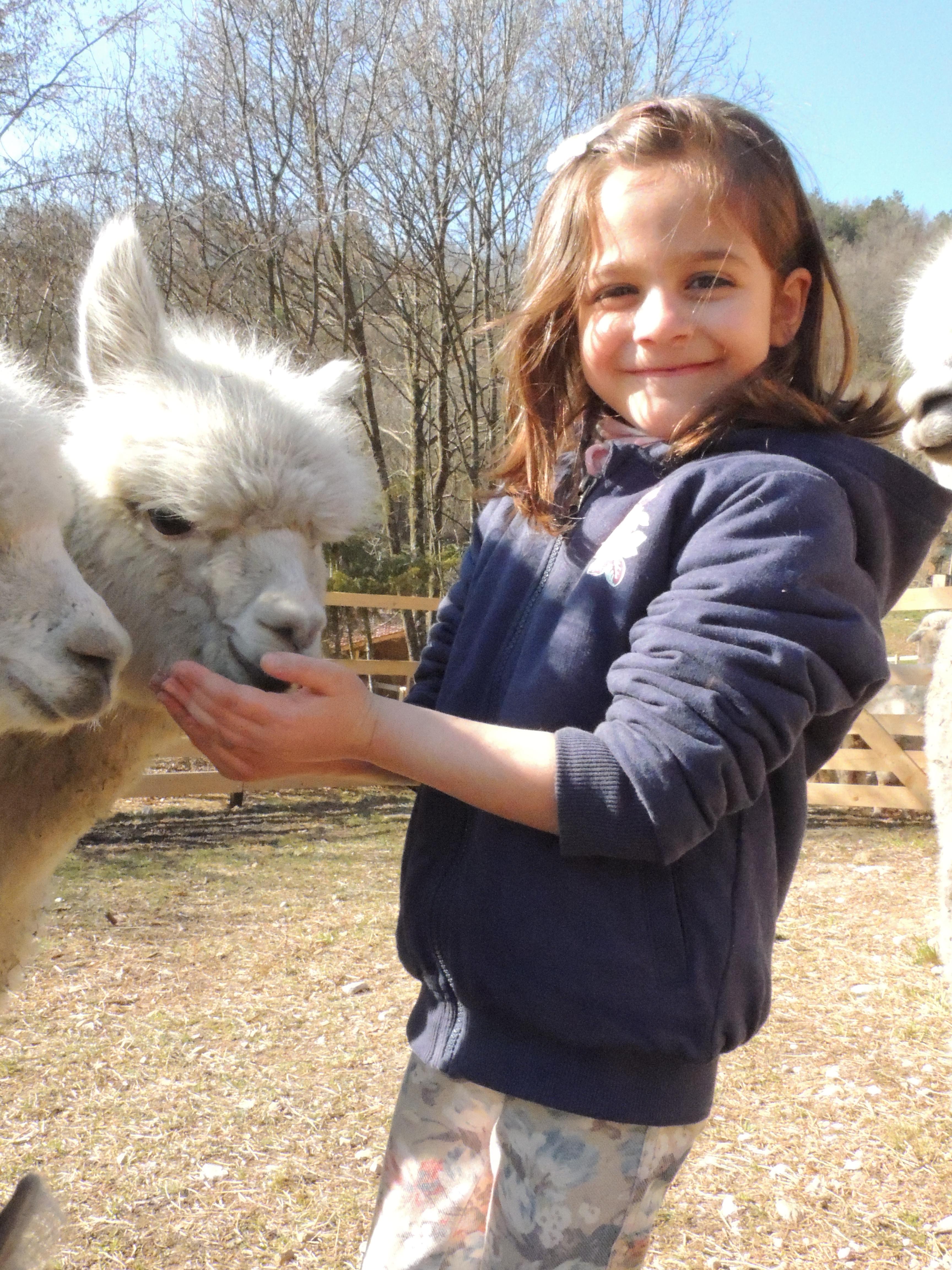 Attività con alpaca