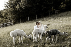 matrimonio con gli alpaca