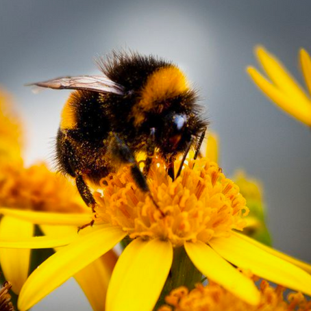 5 Ways you can Help Save the Bees