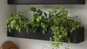 6 Herbs you can Grow Indoors All Year