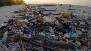 7 EASY WAYS TO REDUCE PLASTIC WASTE