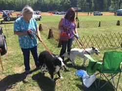 Dog Show contestants