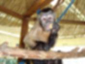 Pet Store, Pet Shop, Petsmart, Petco, Frankie the monkey