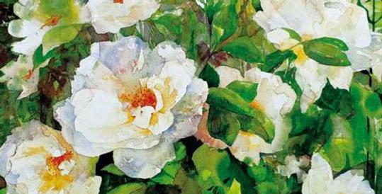 Elegant blank card with beautiful white rose bush
