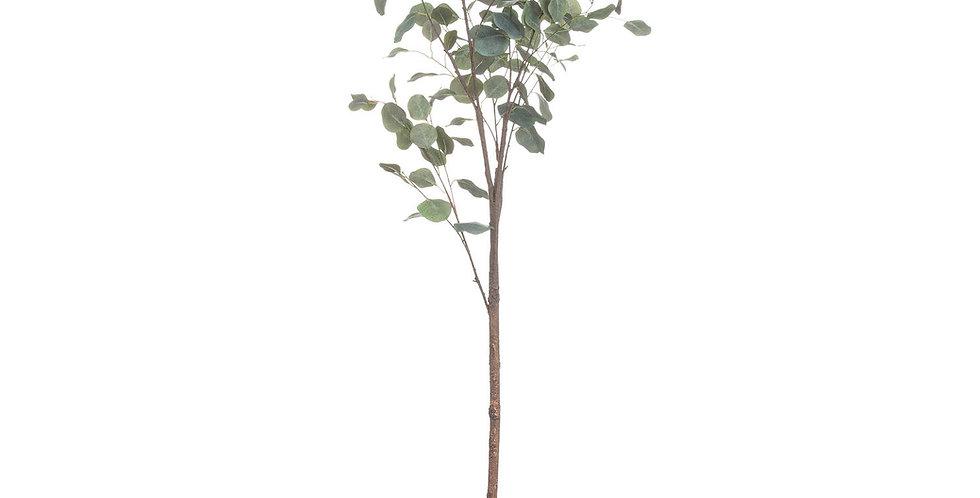 large eucalyptus tree in a metallic pot