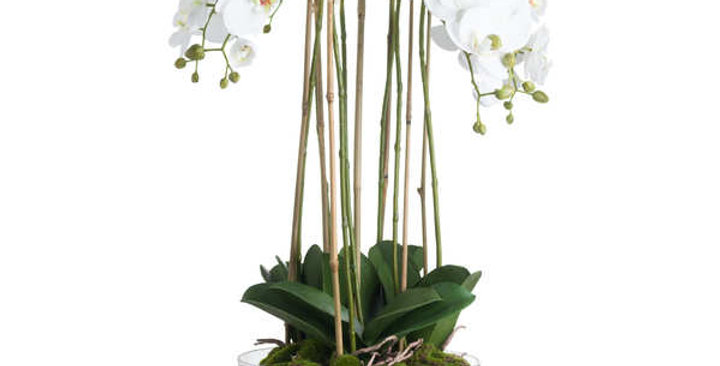 large orchid plant in a glass bowl