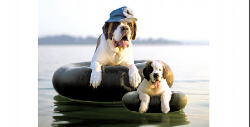 Card with pic of dog with puppy both floating on tyres on a lake. Card reads Happy Father's Day So proud to call you dad