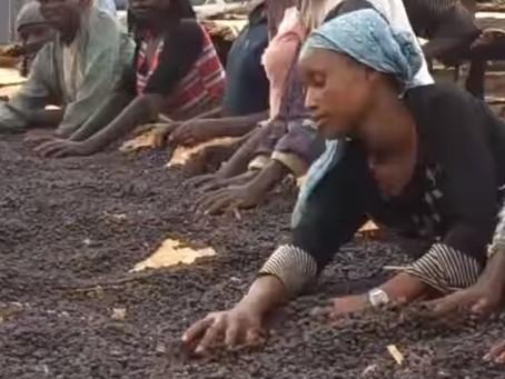Ethiopia Yirgacheffe Worka G1