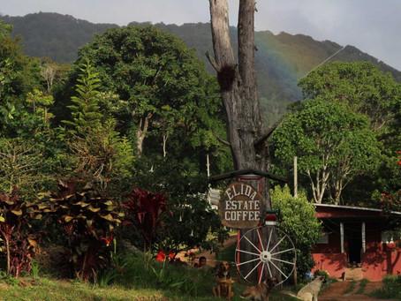The Inherited Coffee, Panama Elida Typica Slow Dry Coffee Bean
