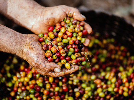 The Yayu Coffee Forest Reserve Project