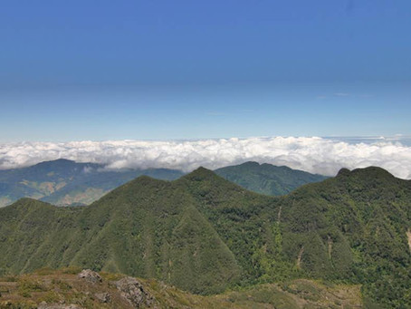 PANAMA ROYAL PACAMARA