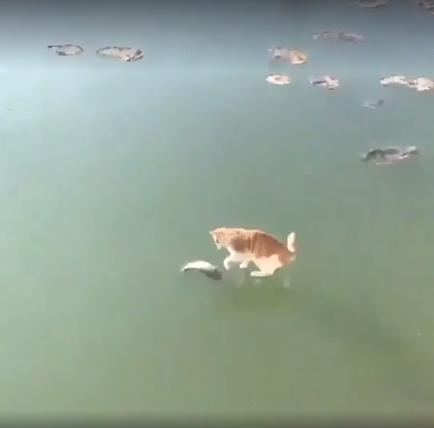 kassjakalad.png
