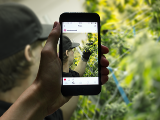 The sky is the limit but has social media imposed a lower ceiling on cannabis?