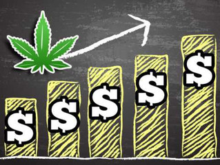 MEDICAL CANNABIS, THE NEXT BIG INVESTMENT!