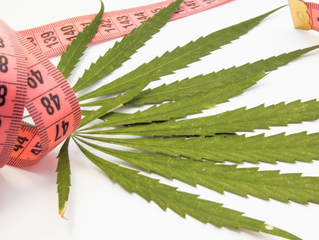 Medical cannabis for treating eating disorders