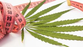 Cannabis medicinal para tratar trastornos alimenticios