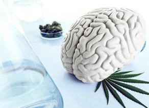 Cannabis y los sueños