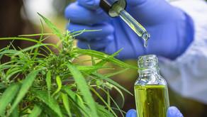 ¿Puede el Cannabis ayudar a aliviar los síntomas de la gripe?