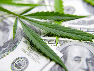 BUSINESS POSSIBILITIES IN THE CANNABIS INDUSTRY
