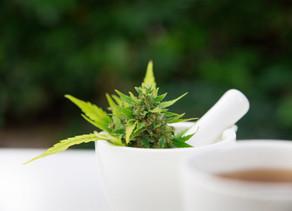 Resolviendo una interrogante ¿Legalizar el Cannabis Medicinal merma o intensifica la violencia?