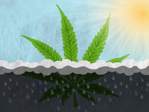 """Si le dices """"NO"""" al cannabis, le estás diciendo """"NO"""" al futuro"""