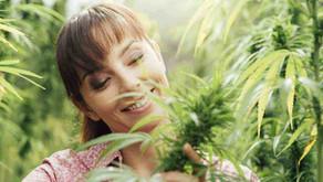 Cannabis y menopausia: ¿Se pueden mejorar los síntomas?